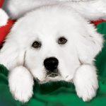 Karácsonyi kutyabalhé teljes mesefilm